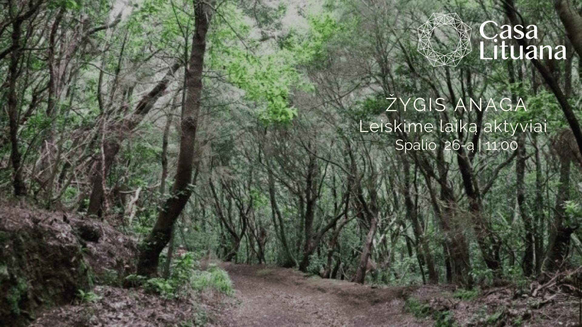 Žygis po paslaptingąjį Anagos mišką