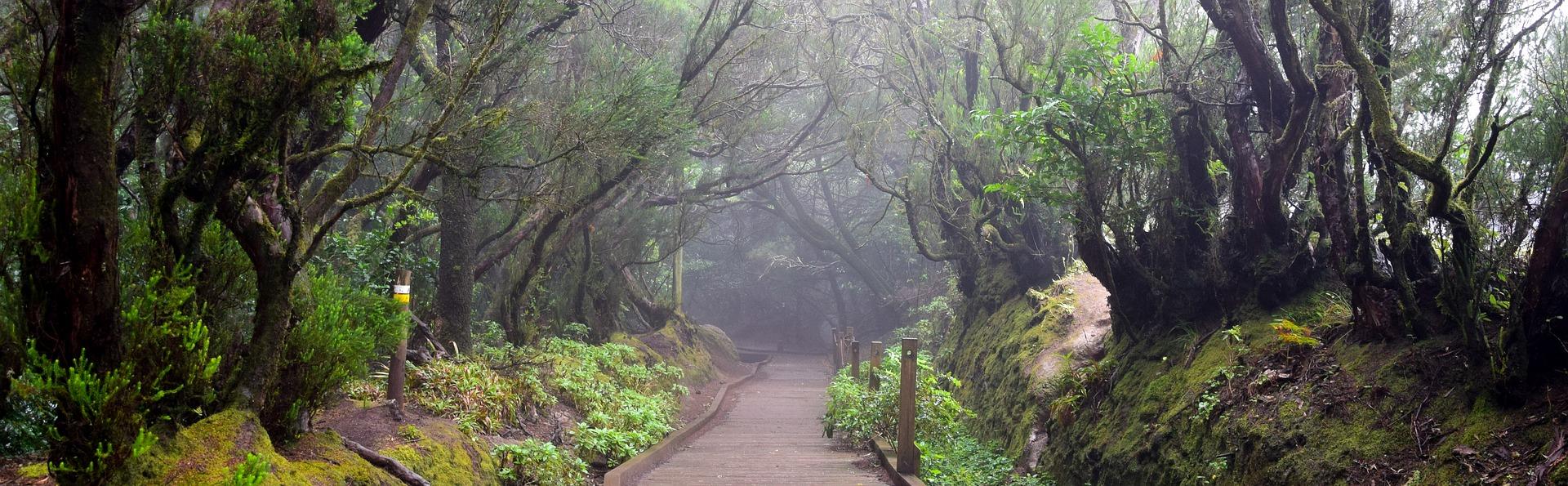 Nacionalinis parkas Anaga | Žygiai