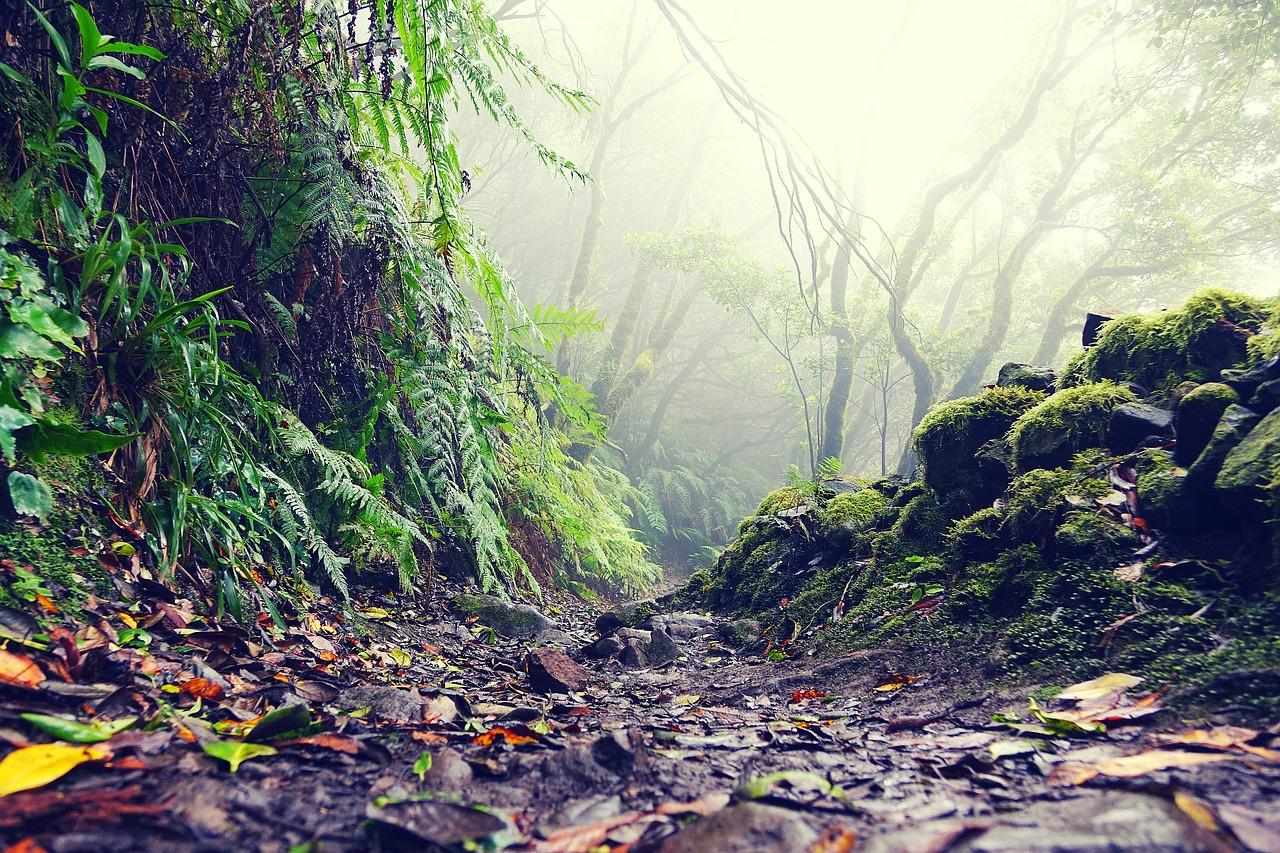 nagos miškai, Tenerifė, žygiai, lankytinos vietos
