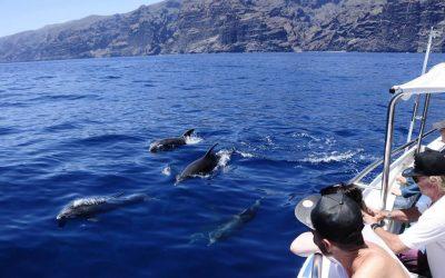Delfinai + banginiai
