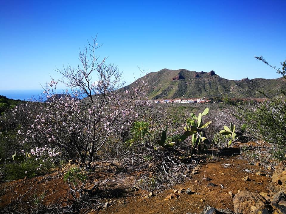 Žydinčių migdolų keliu Lankytinos vietos Tenerifeje Renginiai Lietuviu bendruomene Tenerifeje